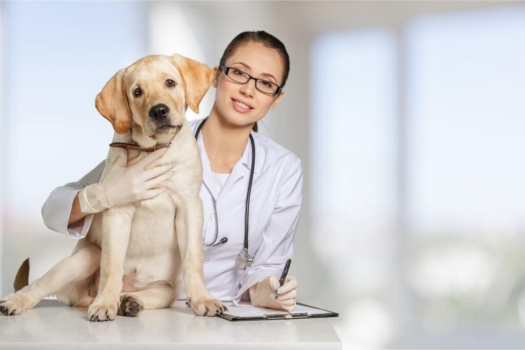 University of Minnesota College of Veterinary Medicine implements custom app to track animal diseases and studies
