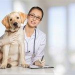 University of Minnesota College of Veterinary Medicine Uses Custom FileMaker App for Canine Genetics Lab